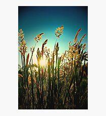 Golden moment.. Photographic Print