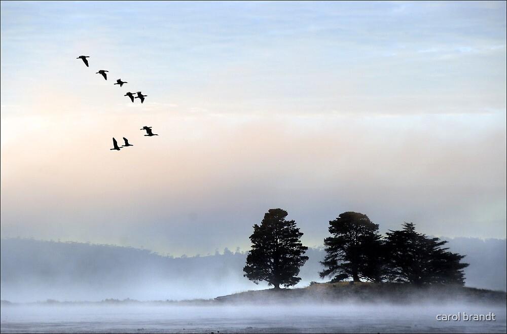 morning mist at dulverton lake by carol brandt