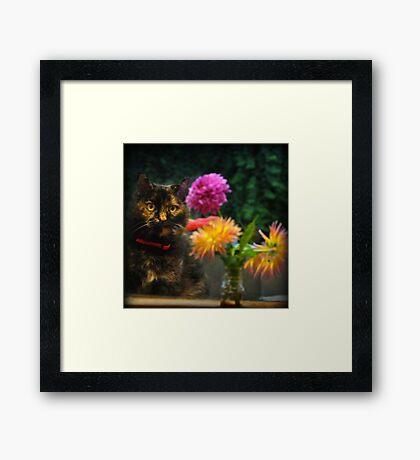 Shelley ~ Framed Print