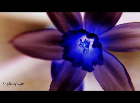 daffodil by photog71