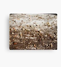 SPRING 11 - SOIL Canvas Print