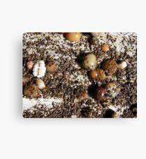 SPRING 18 - GERMINATE Canvas Print