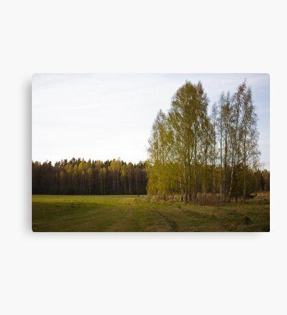 Latvian countryside Canvas Print