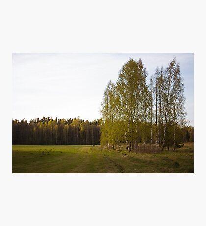 Latvian countryside Photographic Print