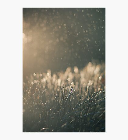 Rain and light Photographic Print