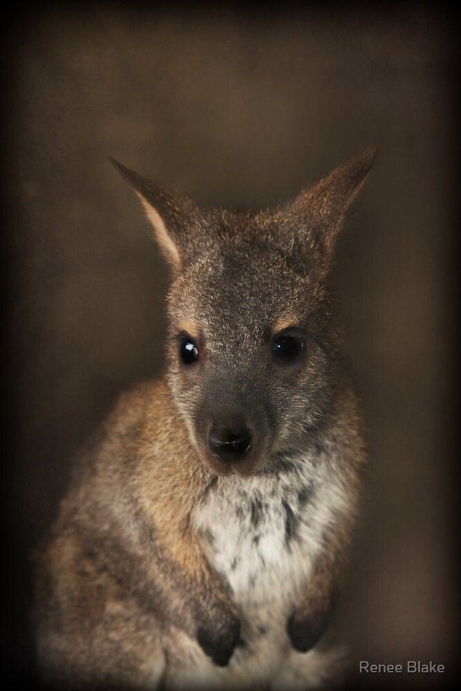 Baby Wallaby ~ by Renee Blake