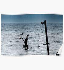 Cormorants on the lake Poster