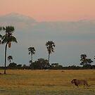 On Patrol by Explorations Africa Dan MacKenzie
