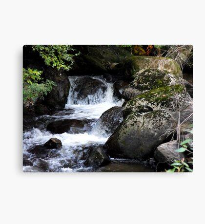 Taggerty Cascades Canvas Print