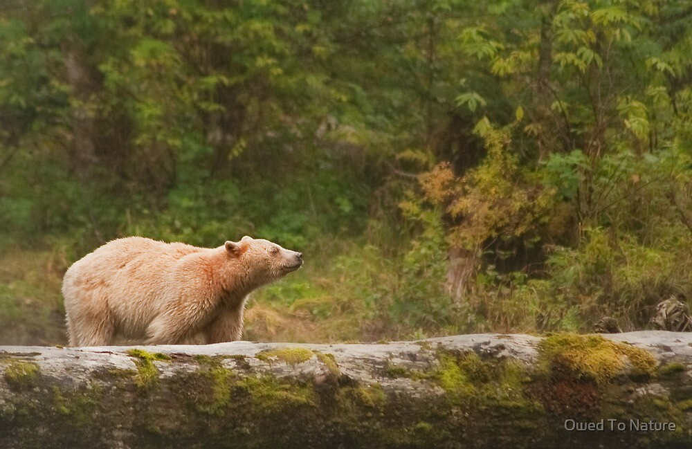 Spirit loves rain by Owed To Nature