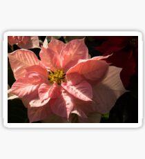 Sunny Pink Poinsettia - Vivacious Christmas Greetings Sticker