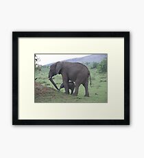 baby elephant and mother Framed Print