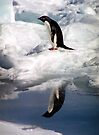 Adelie Penguin in a Reflective Mood by Carole-Anne