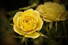 Yellow Roses - textured by PhotosByHealy