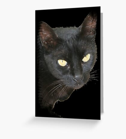 Black Cat Isolated on Black Background Greeting Card