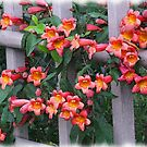 Flowers Along A Fence by © CK Caldwell IPA