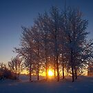Winter Sunset  by Ludwig Wagner
