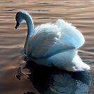 Angel Swan At Fleet by martin bullimore