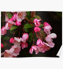 Blooming Recklessly Poster