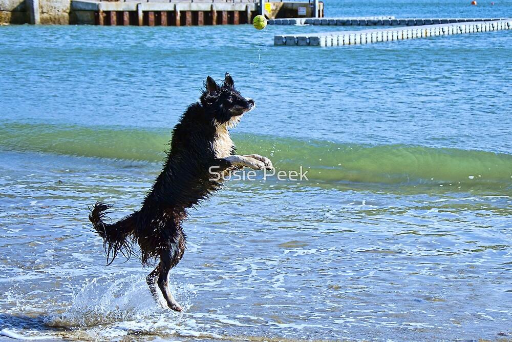Where Did That Ball Go? by Susie Peek