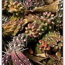 WINTERED CACTUS by Betsy  Seeton