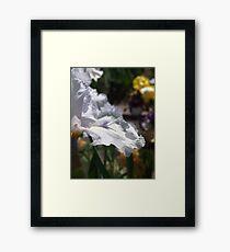 Lavender Icicle Iris Framed Print
