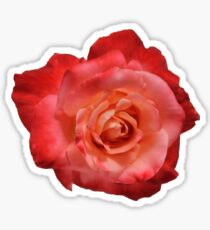 Ombré Red Garden Rose I - Hipster/Pretty/Trendy Flowers Sticker