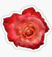 Ombre Red Garden Rose I