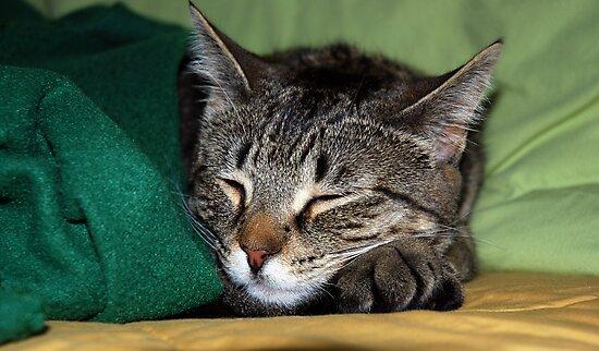 Sweet Dreams Baby Girl by jodi payne