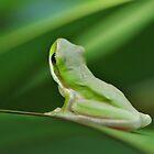 Little Green Frog by Liz Worth