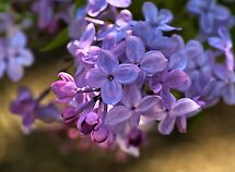WON the 'LAVENDAR LILACS - Group MEMBERS ONLY - May $V' challenge of group 'Lovely Lavender …'