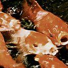 Koi pond - Feeding frenzy by Jessica Chirino Karran
