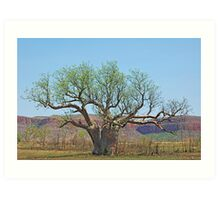 Spring in the Kimberley Art Print