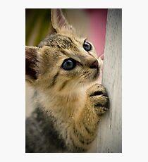 Playing Kitty Photographic Print