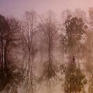 Wyaralong Dam Sunrise by D Byrne
