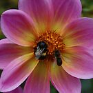 Bees by Keith G. Hawley