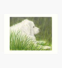 Great Pyrenees Dog Art Green Grass Cathy Peek Pets Art Print