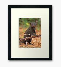Check it out! Framed Print