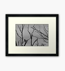 Lonely  Framed Print