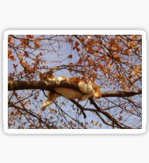 Cat on a tree Sticker