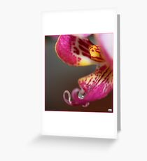Orchis 445 Greeting Card