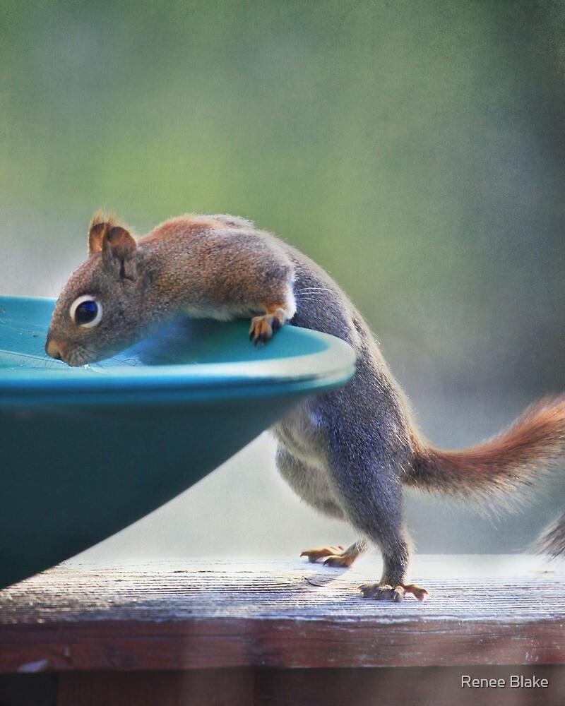 """Hmmm ~ Drinking Fountain Or Squirrel Pool ?"" by Renee Blake"