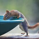 """Hmmm ~ Drinking Fountain Or Squirrel Pool ?"" by Renee Blake"