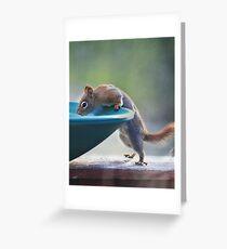 """Hmmm ~ Drinking Fountain Or Squirrel Pool ?"" Greeting Card"