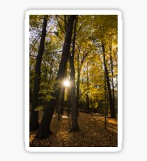 Sun Spotting Autumn - a Peaceful Forest in the Fall Sticker