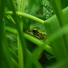 Green Frog by PhotoGirlSC