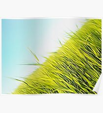 green wheat Poster