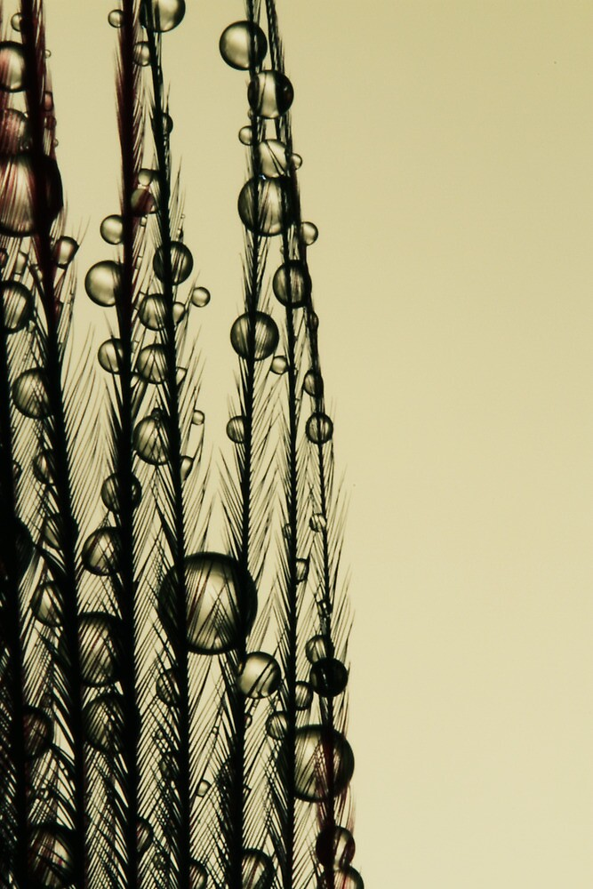 Charcoal Feather Drops by Sharon Johnstone