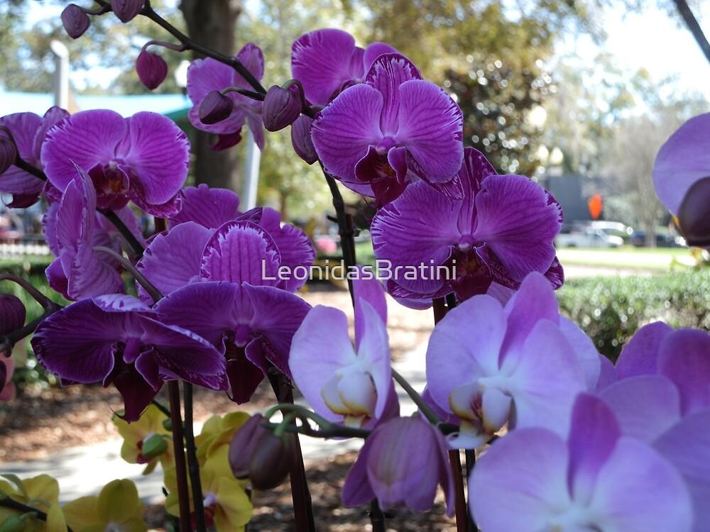 Purple Nature in The Park by LeonidasBratini