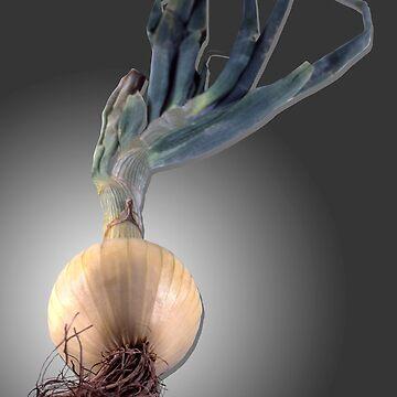 Sweet Onion by roim